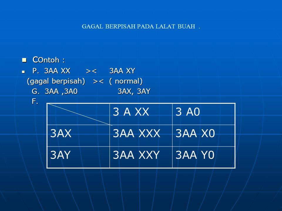 GAGAL BERPISAH PADA LALAT BUAH. c Ontoh : c Ontoh : P. 3AA XX > < 3AA XY (gagal berpisah) > < ( normal) G. 3AA,3A0 3AX, 3AY G. 3AA,3A0 3AX, 3AY F. F.