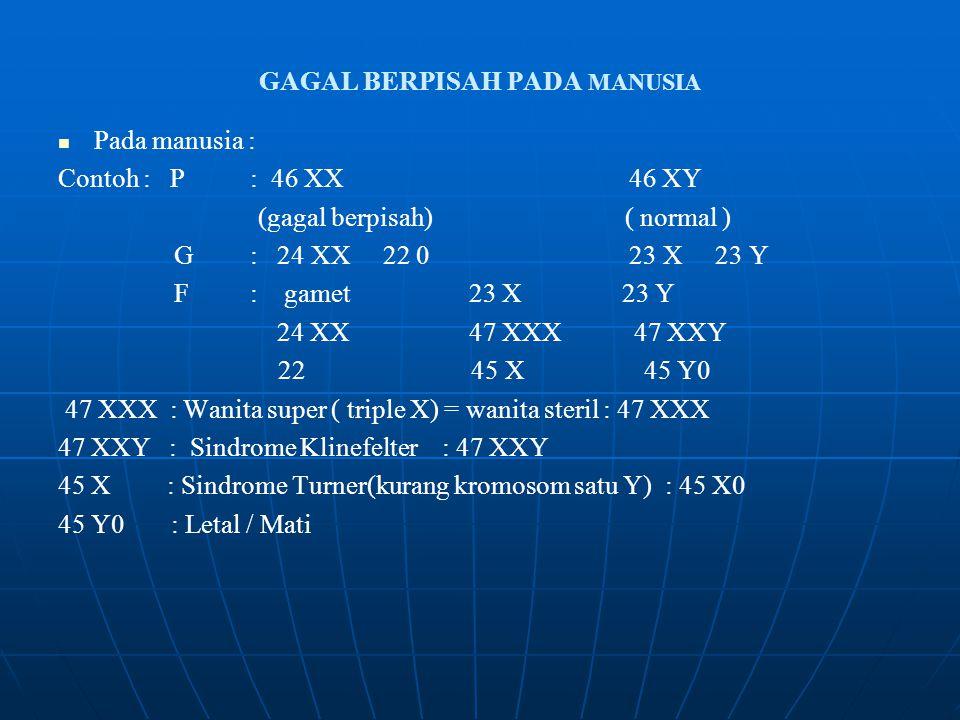 GAGAL BERPISAH PADA MANUSIA Pada manusia : Contoh : P: 46 XX 46 XY (gagal berpisah) ( normal ) G: 24 XX 22 0 23 X 23 Y F: gamet 23 X 23 Y 24 XX 47 XXX47 XXY 22 45 X 45 Y0 47 XXX : Wanita super ( triple X) = wanita steril : 47 XXX 47 XXY : Sindrome Klinefelter : 47 XXY 45 X : Sindrome Turner(kurang kromosom satu Y) : 45 X0 45 Y0 : Letal / Mati