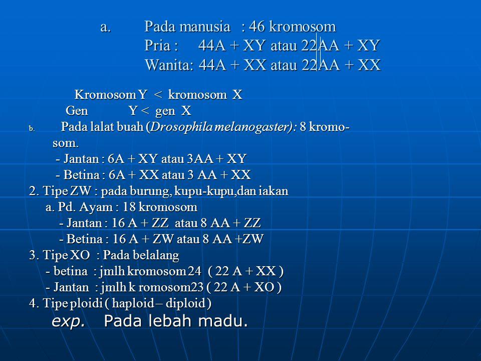 a.Pada manusia : 46 kromosom Pria : 44A + XY atau 22AA + XY Wanita: 44A + XX atau 22AA + XX Kromosom Y < kromosom X Kromosom Y < kromosom X Gen Y < ge