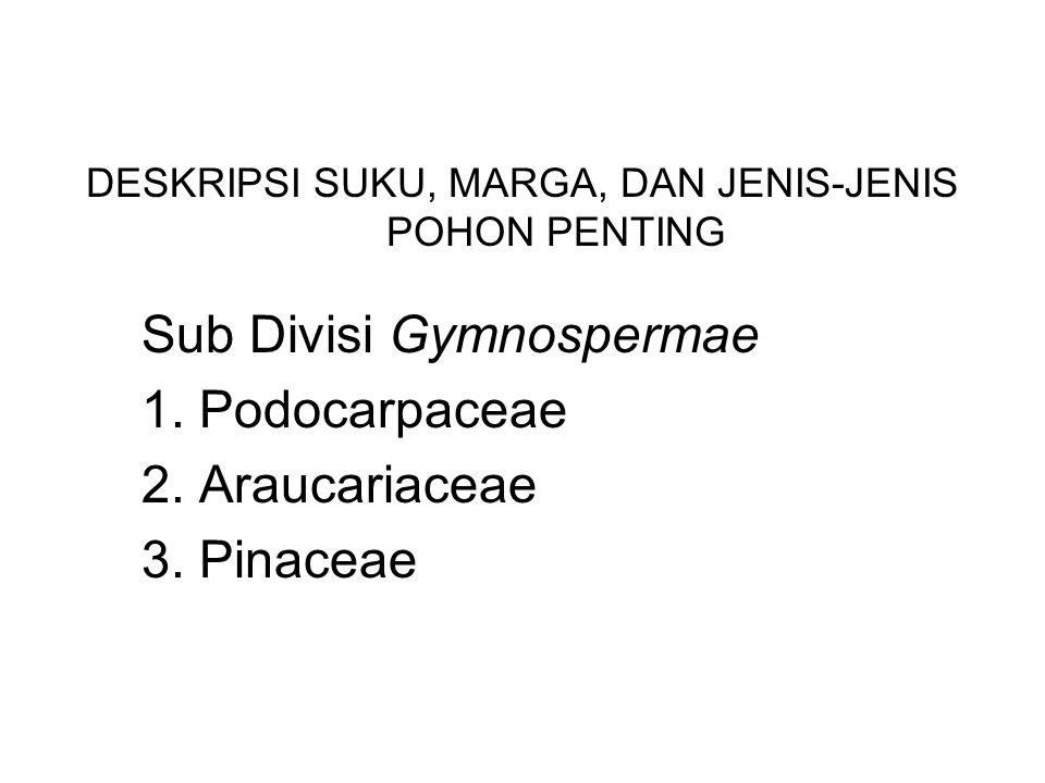 DESKRIPSI SUKU, MARGA, DAN JENIS-JENIS POHON PENTING Sub Divisi Gymnospermae 1. Podocarpaceae 2. Araucariaceae 3. Pinaceae