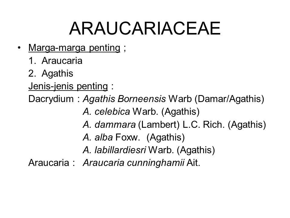Marga-marga penting ; 1. Araucaria 2. Agathis Jenis-jenis penting : Dacrydium : Agathis Borneensis Warb (Damar/Agathis) A. celebica Warb. (Agathis) A.