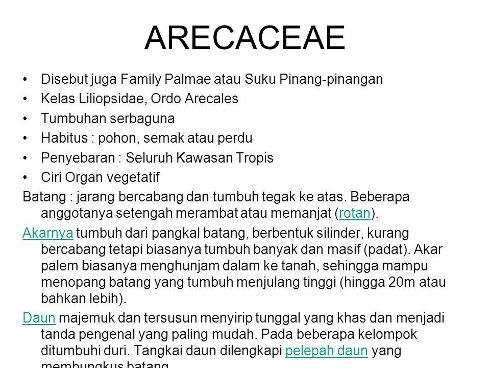 ARECACEAE Disebut juga Family Palmae atau Suku Pinang-pinangan Kelas Liliopsidae, Ordo Arecales Tumbuhan serbaguna Habitus : pohon, semak atau perdu P