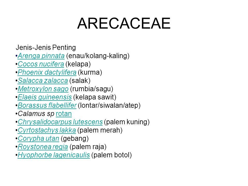 Jenis-Jenis Penting Arenga pinnata (enau/kolang-kaling)Arenga pinnata Cocos nucifera (kelapa)Cocos nucifera Phoenix dactylifera (kurma)Phoenix dactyli