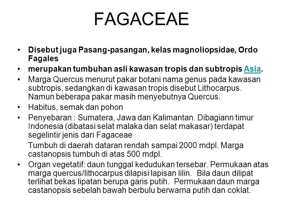 FAGACEAE Disebut juga Pasang-pasangan, kelas magnoliopsidae, Ordo Fagales merupakan tumbuhan asli kawasan tropis dan subtropis Asia.Asia Marga Quercus