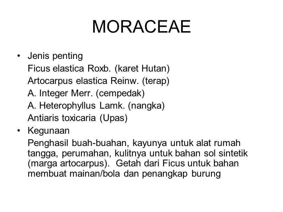 MORACEAE Jenis penting Ficus elastica Roxb. (karet Hutan) Artocarpus elastica Reinw. (terap) A. Integer Merr. (cempedak) A. Heterophyllus Lamk. (nangk
