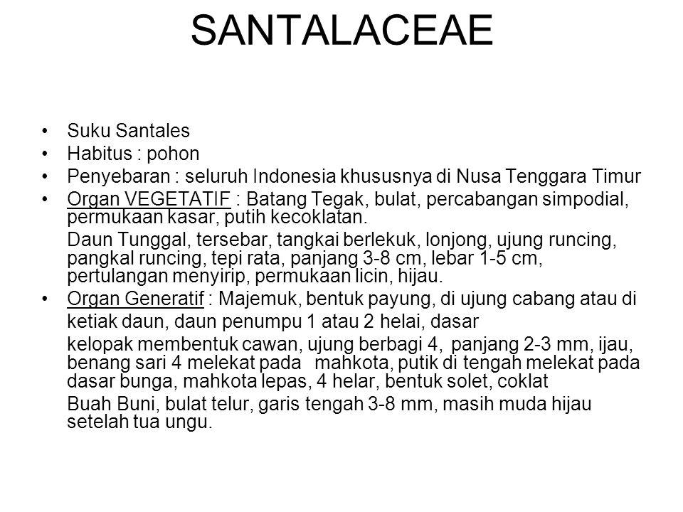 SANTALACEAE Suku Santales Habitus : pohon Penyebaran : seluruh Indonesia khususnya di Nusa Tenggara Timur Organ VEGETATIF : Batang Tegak, bulat, perca