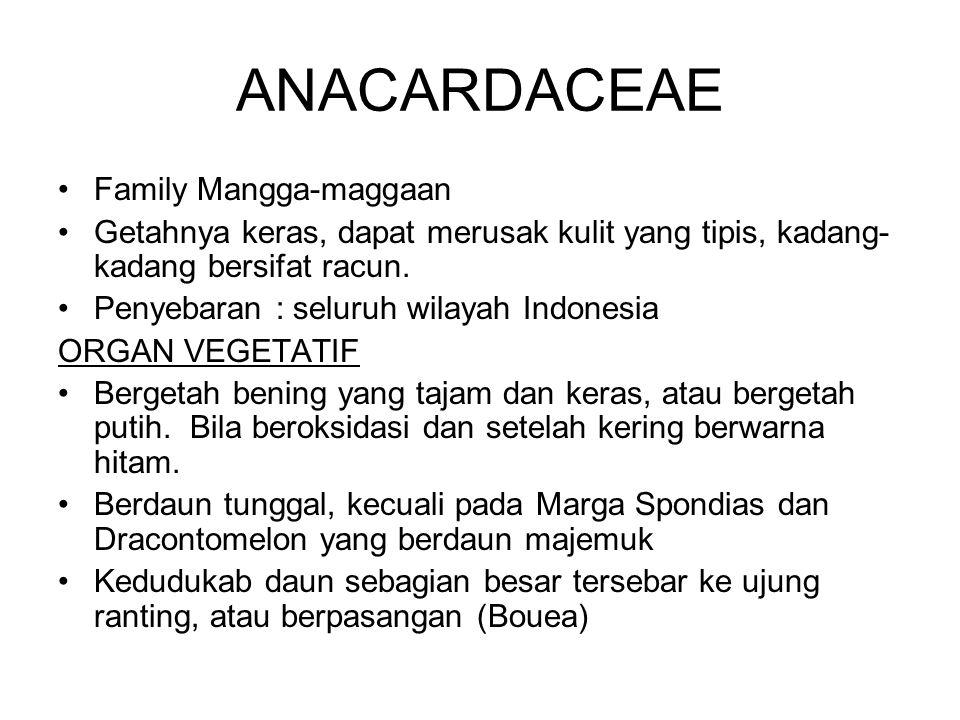 ANACARDACEAE Family Mangga-maggaan Getahnya keras, dapat merusak kulit yang tipis, kadang- kadang bersifat racun. Penyebaran : seluruh wilayah Indones