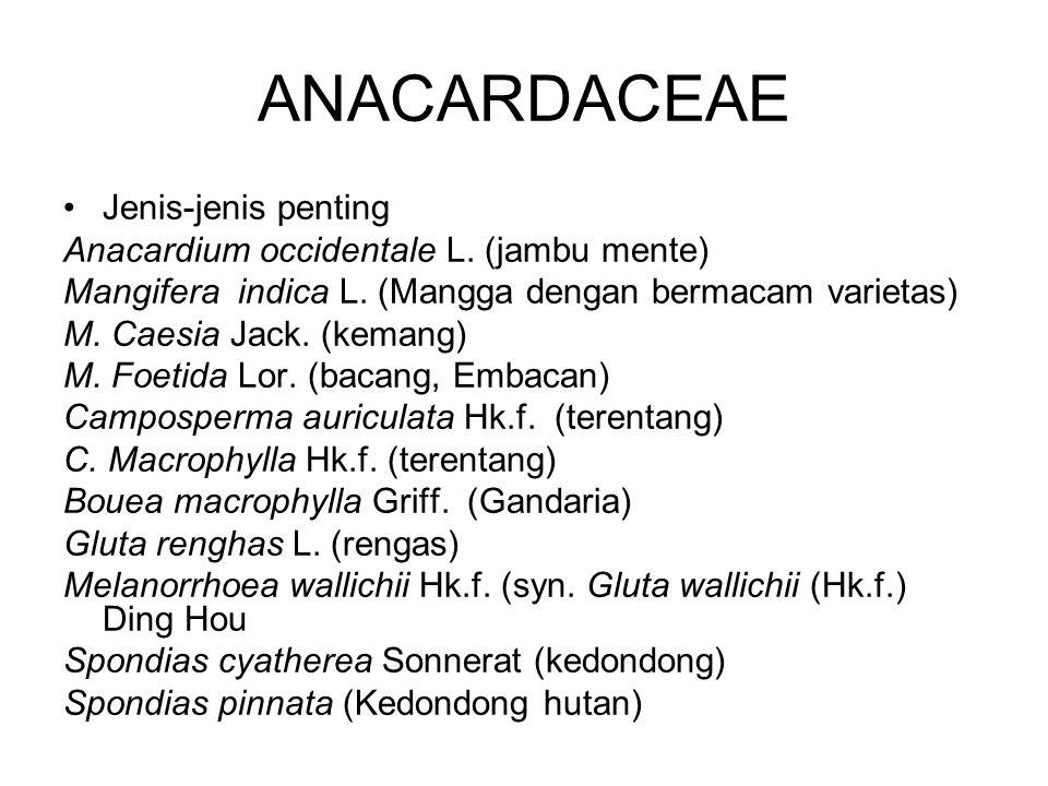 ANACARDACEAE Jenis-jenis penting Anacardium occidentale L. (jambu mente) Mangifera indica L. (Mangga dengan bermacam varietas) M. Caesia Jack. (kemang