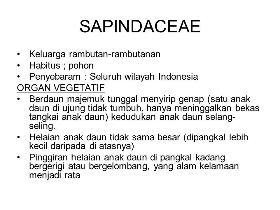 SAPINDACEAE Keluarga rambutan-rambutanan Habitus ; pohon Penyebaram : Seluruh wilayah Indonesia ORGAN VEGETATIF Berdaun majemuk tunggal menyirip genap