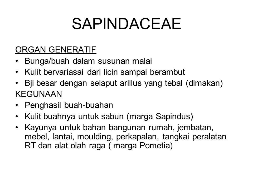 SAPINDACEAE ORGAN GENERATIF Bunga/buah dalam susunan malai Kulit bervariasai dari licin sampai berambut Bji besar dengan selaput arillus yang tebal (d