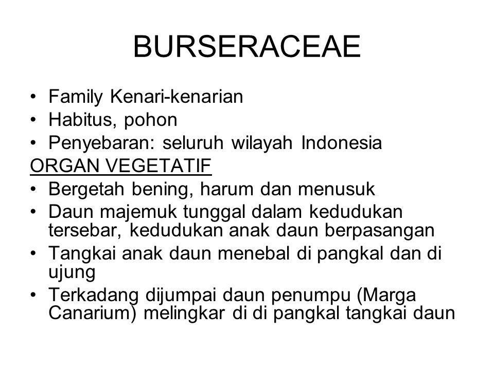 BURSERACEAE Family Kenari-kenarian Habitus, pohon Penyebaran: seluruh wilayah Indonesia ORGAN VEGETATIF Bergetah bening, harum dan menusuk Daun majemu