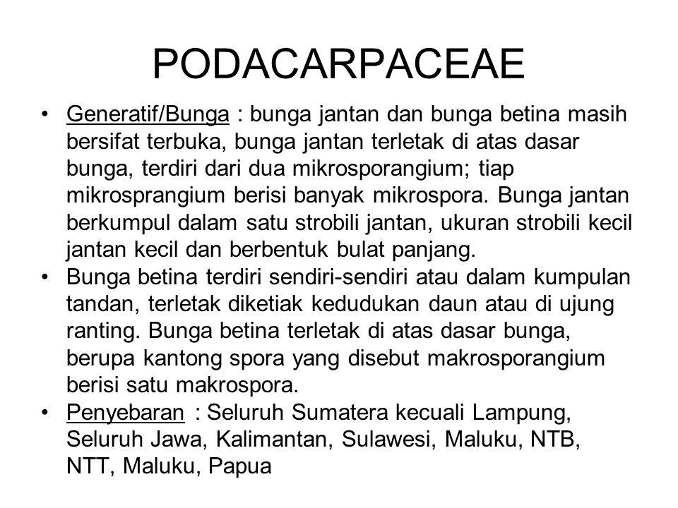 SANTALACEAE Kegunaan : Kayu Santalum album berkhasiat sebagai penghalus kulit, peluruh keringat, pereda kejang, pencegah mual dan daunnya untuk obat sakit demam.