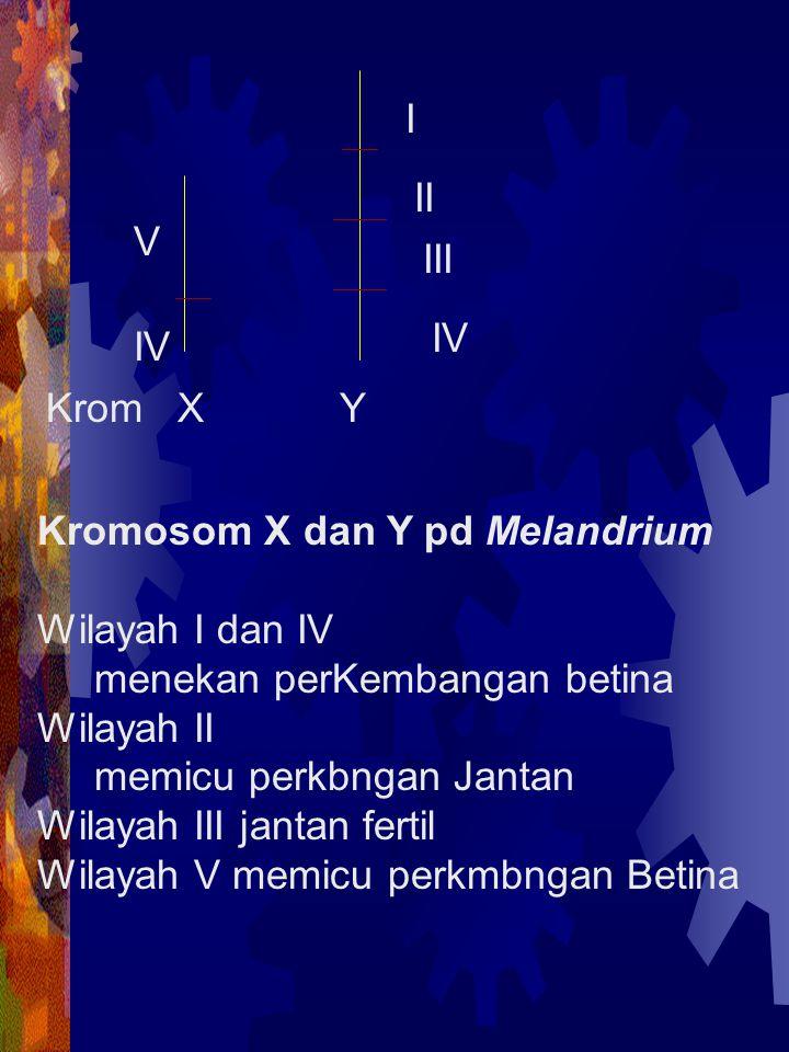 Kromosom X dan Y pd Melandrium Wilayah I dan IV menekan perKembangan betina Wilayah II memicu perkbngan Jantan Wilayah III jantan fertil Wilayah V mem