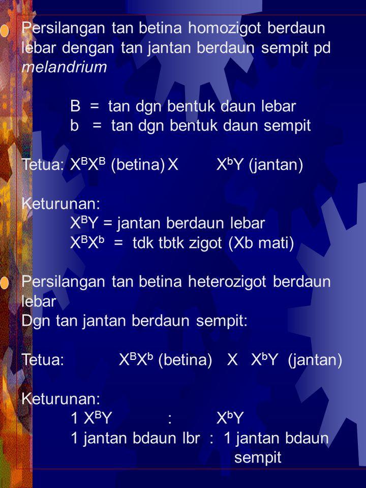 Persilangan tan betina homozigot berdaun lebar dengan tan jantan berdaun sempit pd melandrium B = tan dgn bentuk daun lebar b = tan dgn bentuk daun se