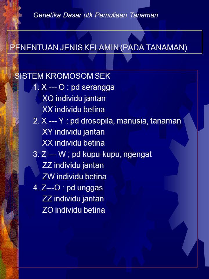 Persilangan tan betina homozigot berdaun lebar dengan tan jantan berdaun sempit pd melandrium B = tan dgn bentuk daun lebar b = tan dgn bentuk daun sempit Tetua:X B X B (betina)XX b Y (jantan) Keturunan: X B Y = jantan berdaun lebar X B X b = tdk tbtk zigot (Xb mati) Persilangan tan betina heterozigot berdaun lebar Dgn tan jantan berdaun sempit: Tetua:X B X b (betina) X X b Y (jantan) Keturunan: 1 X B Y:X b Y 1 jantan bdaun lbr : 1 jantan bdaun sempit