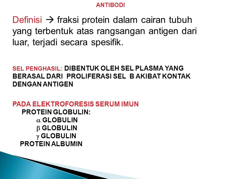 ANTIBODI Definisi  fraksi protein dalam cairan tubuh yang terbentuk atas rangsangan antigen dari luar, terjadi secara spesifik. SEL PENGHASIL: DIBENT