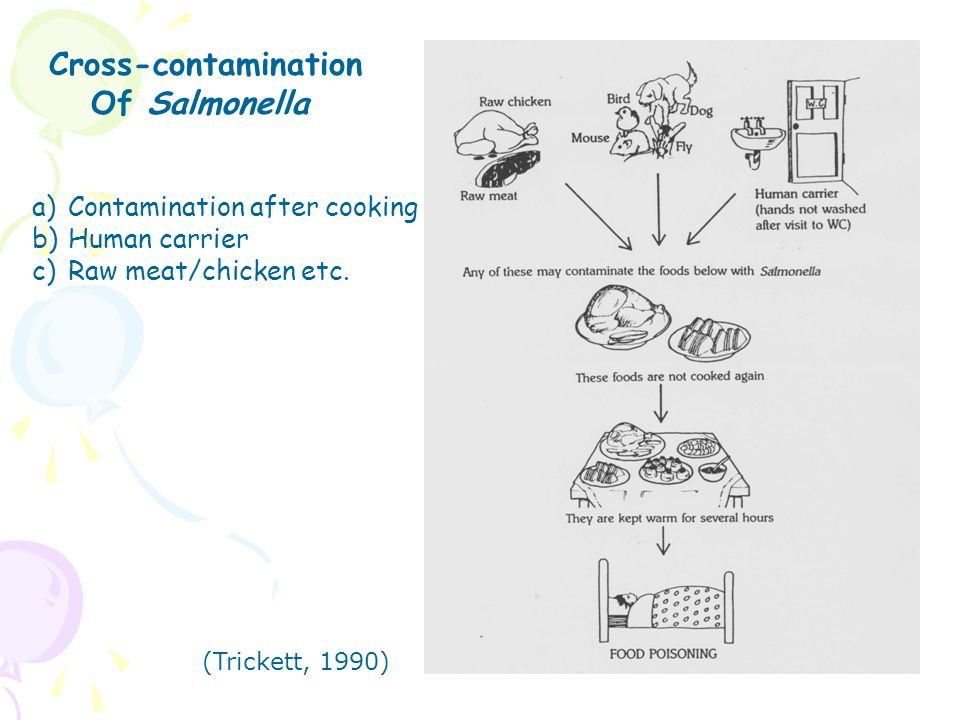 Cross-contamination Of Salmonella a)Contamination after cooking b)Human carrier c)Raw meat/chicken etc. (Trickett, 1990)