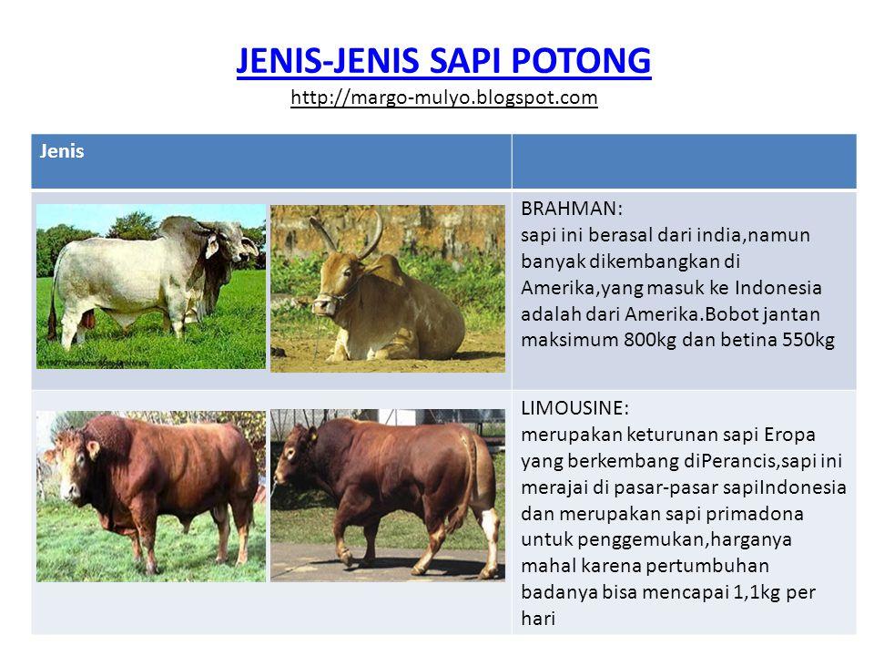 JENIS-JENIS SAPI POTONG http://margo-mulyo.blogspot.com Jenis CHAROLAIS: sapi jenis ini juga di kembangkan di negara Perancis,warna bulu perak dan merupakan jenis paling besar di negara tersebut,sapi ini jarang di jumpai di pasar-pasar tradisional.Pertumbuhan badannya perhari bisa mencapai 1,3kg HEREFORD: sapi ini juga merupakan sapi keturunan Eropa yang dikembangkan di Inggris,berat jantan rata-rata 900kg dan betina 725kg