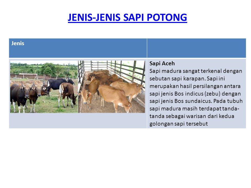 JENIS-JENIS SAPI POTONG Jenis Sapi Aceh Sapi madura sangat terkenal dengan sebutan sapi karapan. Sapi ini merupakan hasil persilangan antara sapi jeni