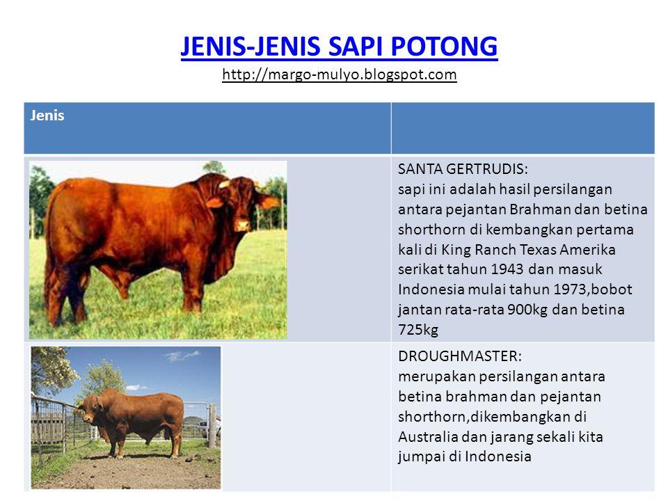 JENIS-JENIS SAPI POTONG Jenis Sapi Ongole Sapi ongole merupakan keturunan sapi zebu dari India yang mulai diternakan secara murni di pulau Sumba, sehingga dikenal dengan nama sapi Sumba ongole.