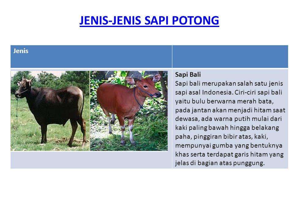 JENIS-JENIS SAPI POTONG Jenis Sapi Bali Sapi bali merupakan salah satu jenis sapi asal Indonesia. Ciri-ciri sapi bali yaitu bulu berwarna merah bata,