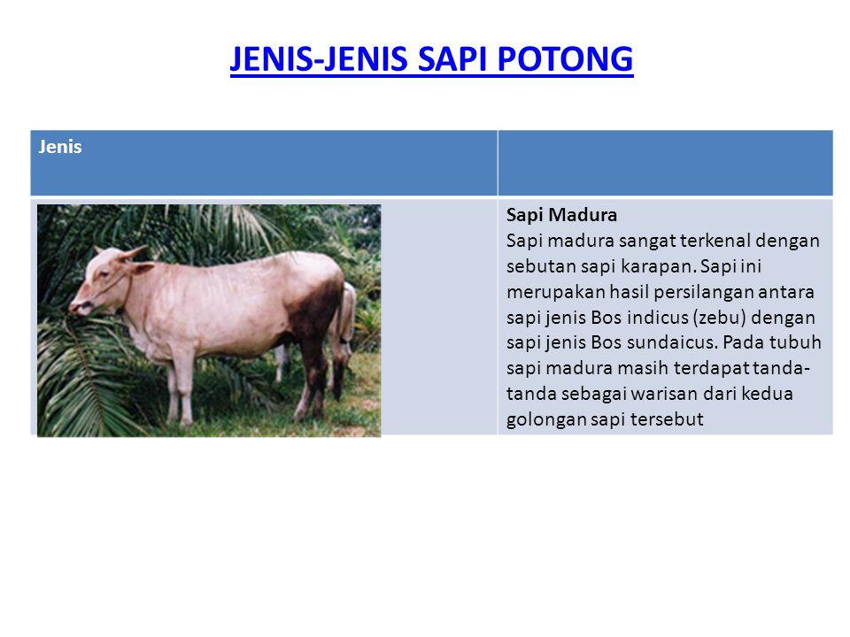 JENIS-JENIS SAPI POTONG Jenis Sapi Madura Sapi madura sangat terkenal dengan sebutan sapi karapan. Sapi ini merupakan hasil persilangan antara sapi je