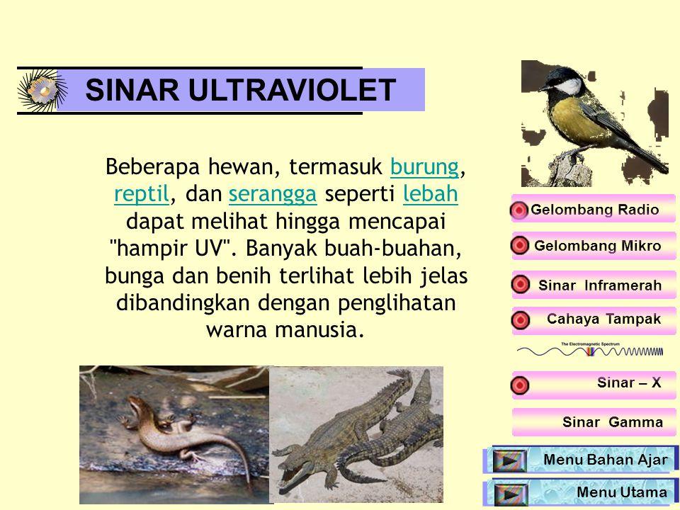 SINAR ULTRAVIOLET Beberapa hewan, termasuk burung, reptil, dan serangga seperti lebah dapat melihat hingga mencapai
