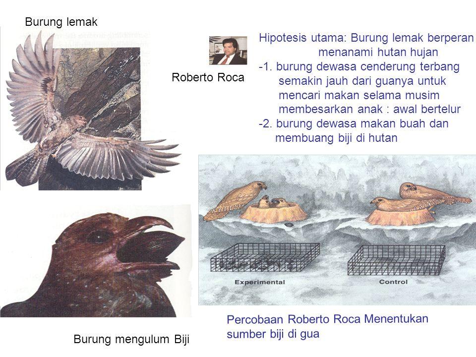 Burung lemak Burung mengulum Biji Percobaan Roberto Roca Menentukan sumber biji di gua Roberto Roca Hipotesis utama: Burung lemak berperan menanami hu
