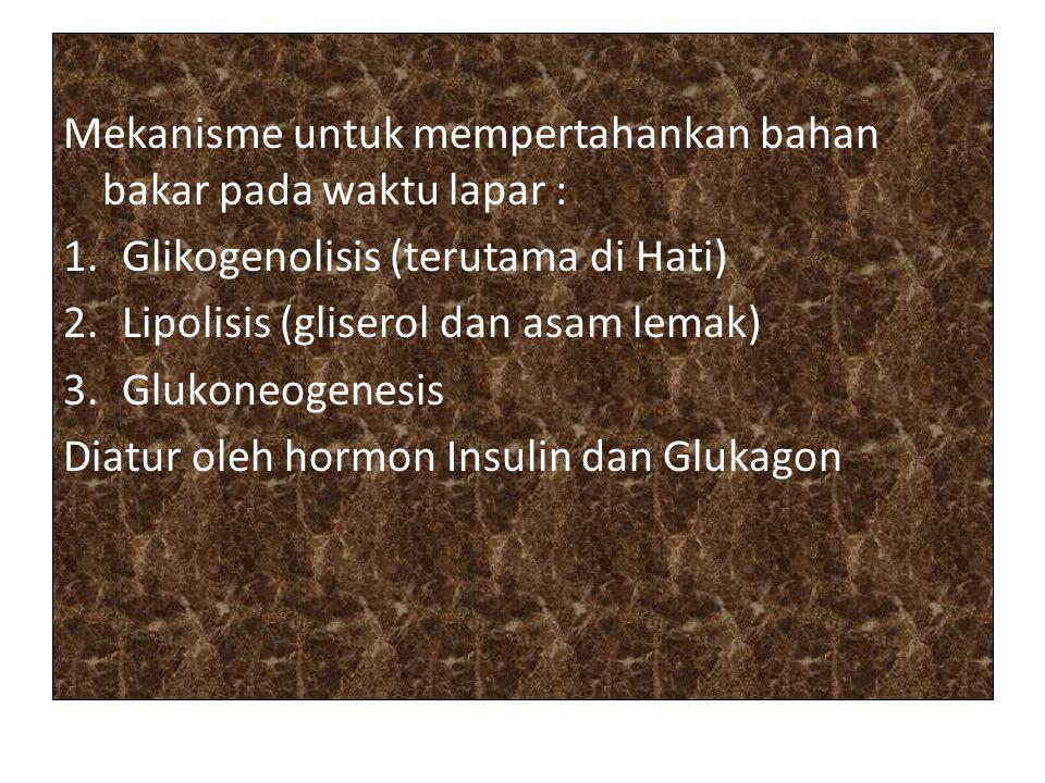 Mekanisme untuk mempertahankan bahan bakar pada waktu lapar : 1.Glikogenolisis (terutama di Hati) 2.Lipolisis (gliserol dan asam lemak) 3.Glukoneogene