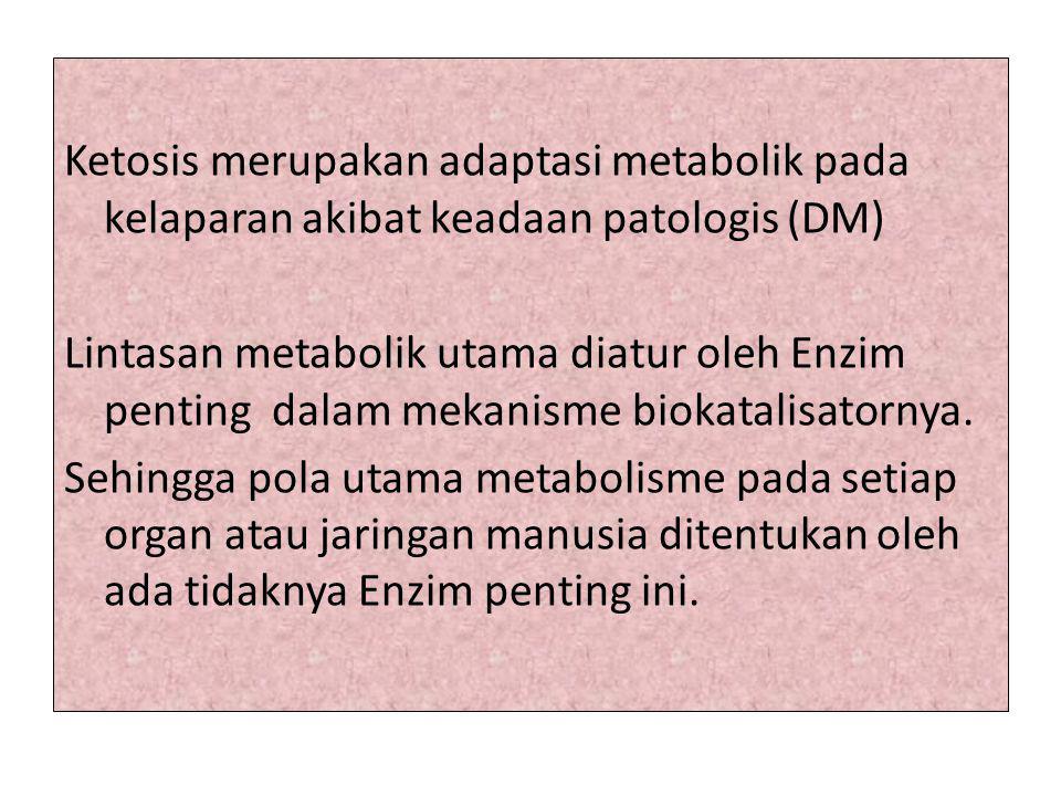 Ketosis merupakan adaptasi metabolik pada kelaparan akibat keadaan patologis (DM) Lintasan metabolik utama diatur oleh Enzim penting dalam mekanisme b