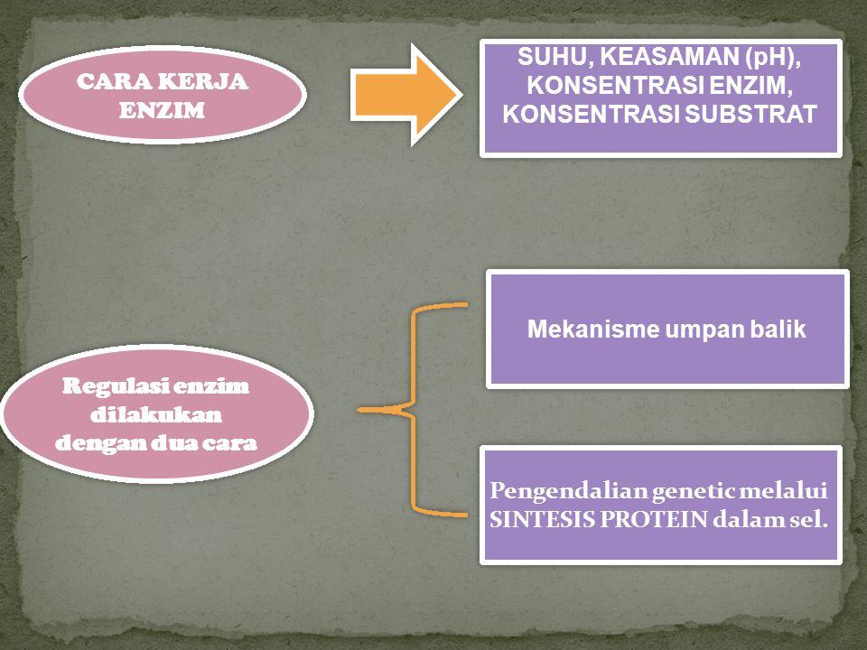 CARA KERJA ENZIM SUHU, KEASAMAN (pH), KONSENTRASI ENZIM, KONSENTRASI SUBSTRAT Regulasi enzim dilakukan dengan dua cara Mekanisme umpan balik Pengendal