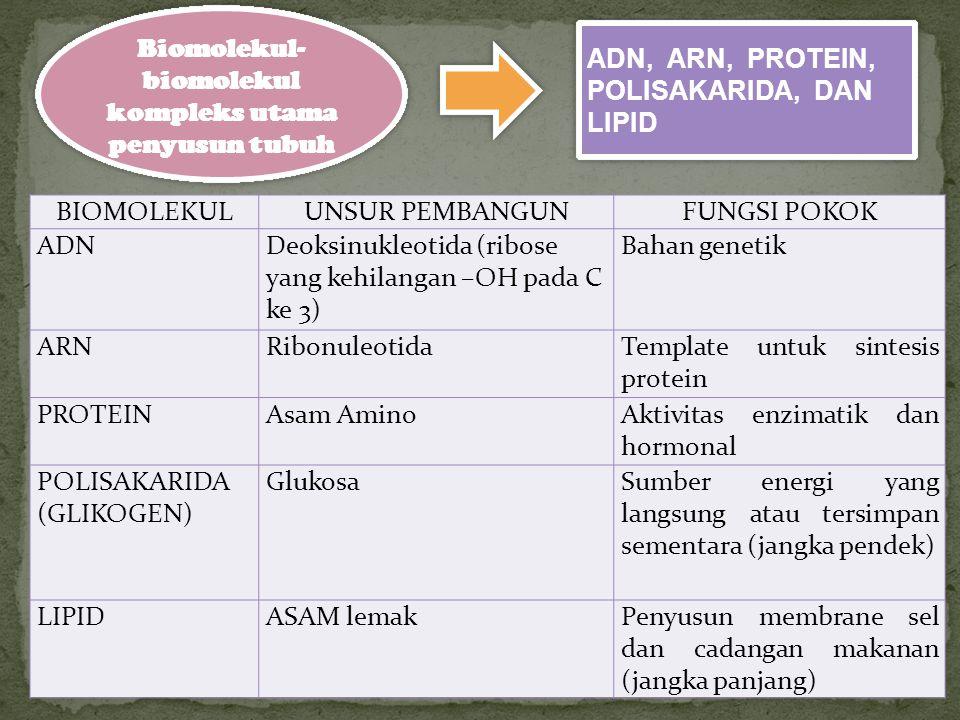 URUTAN KEKOMPLEKSAN BIOMOLEKUL Molekul sederhana Molekul bahan pembangun MAKRO MOLEKUL Organel dan agregat Supramol ekul SEL CO, H2O, NH3, Dll Asam amino, gula sederhana, Nukleotida, Asam lemak PROTEIN, Polisakarida, Asam inti, lipida Komponen sel: membrane inti, RE, lisosom dll