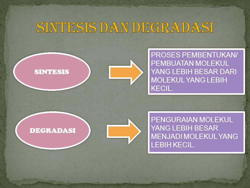 SINTESIS DEGRADASI PROSES PEMBENTUKAN/ PEMBUATAN MOLEKUL YANG LEBIH BESAR DARI MOLEKUL YANG LEBIH KECIL. PENGURAIAN MOLEKUL YANG LEBIH BESAR MENJADI M