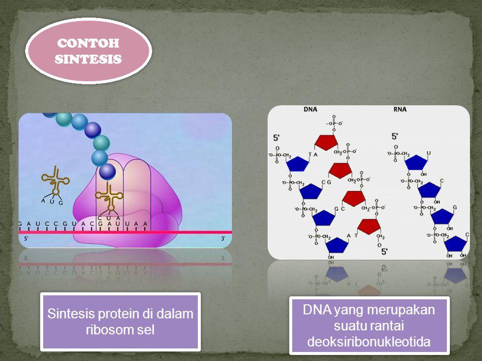 CONTOH SINTESIS Sintesis protein di dalam ribosom sel DNA yang merupakan suatu rantai deoksiribonukleotida