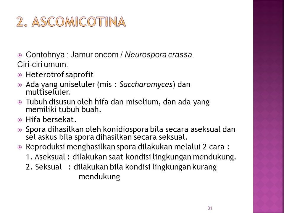  Contohnya : Jamur oncom / Neurospora crassa.