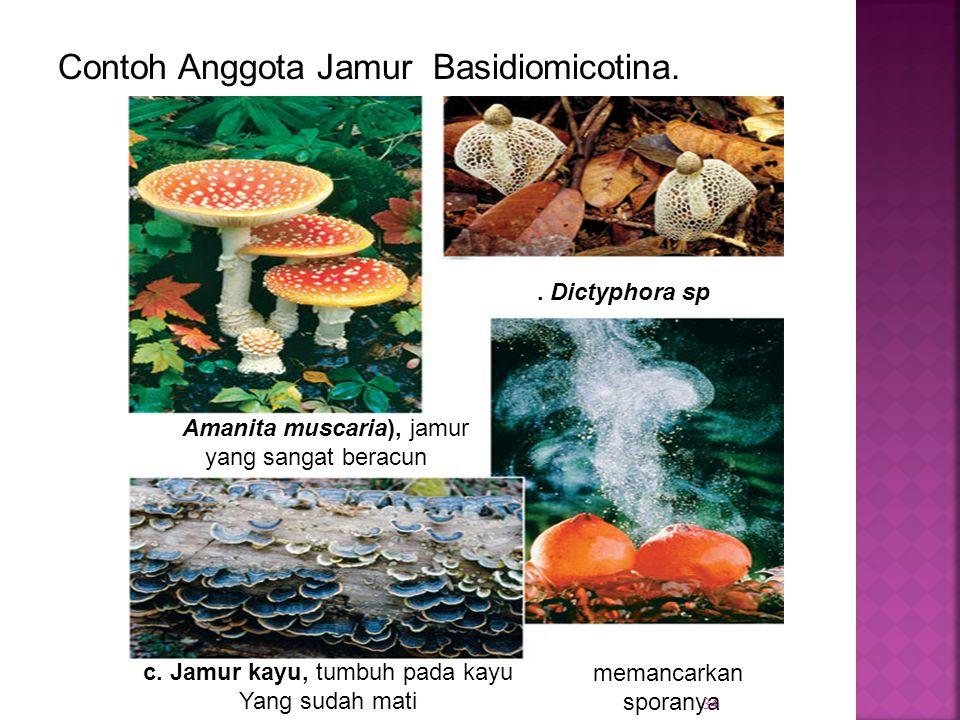Contoh Anggota Jamur Basidiomicotina. a. Amanita muscaria), jamur yang sangat beracun b.