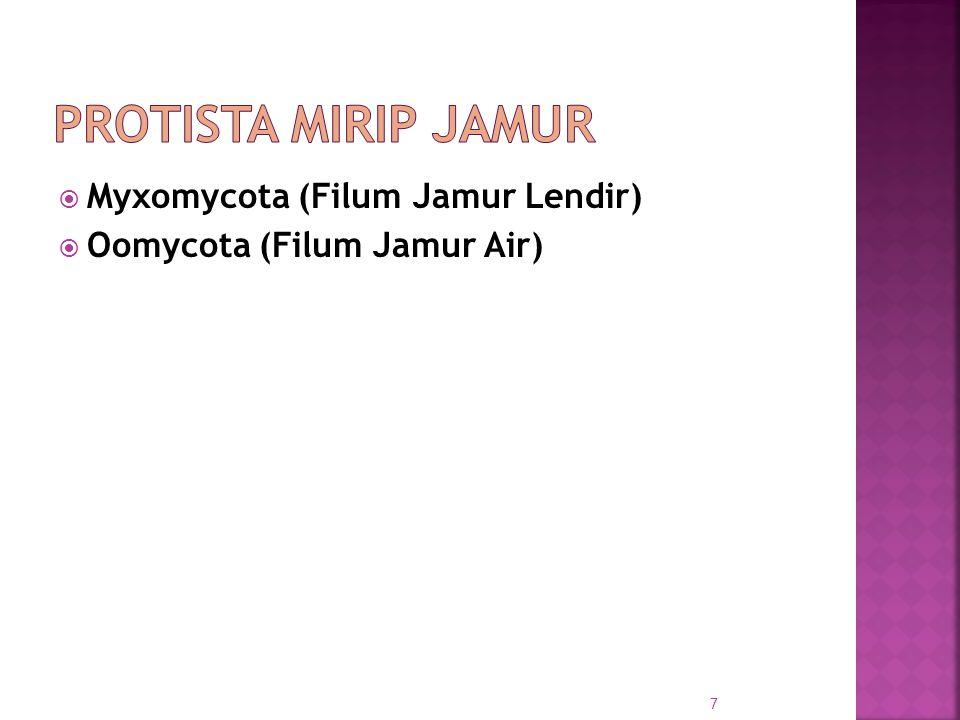  Myxomycota (Filum Jamur Lendir)  Oomycota (Filum Jamur Air) 7