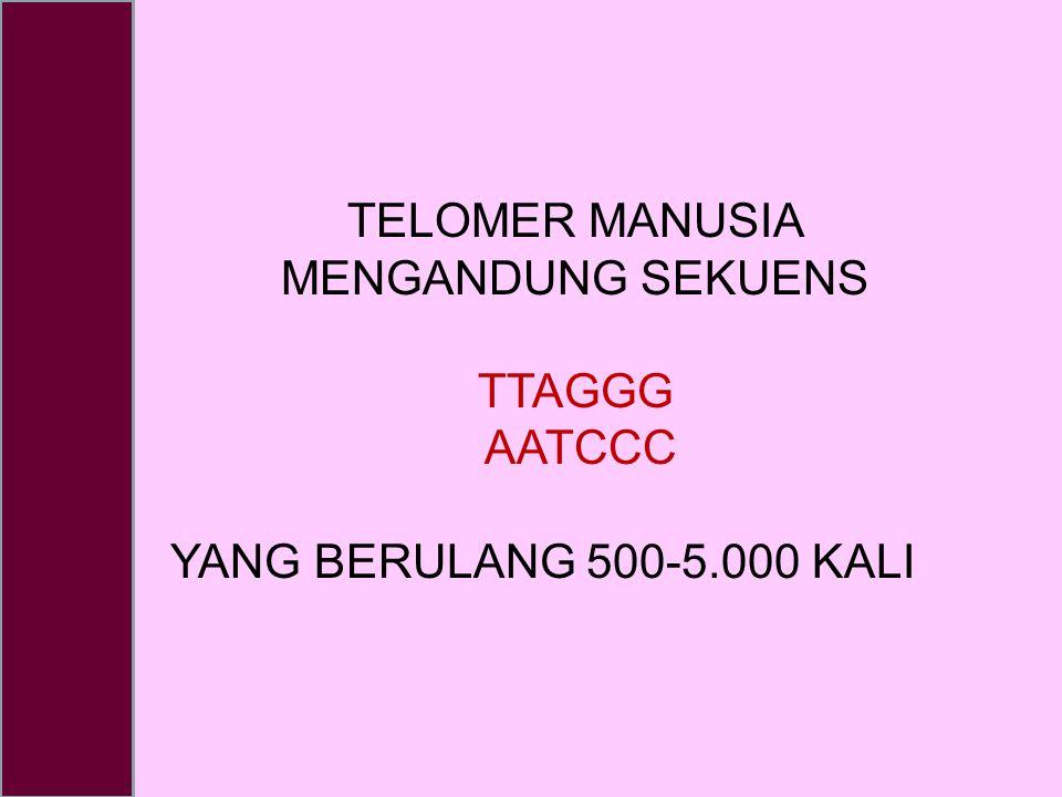 TELOMER MANUSIA MENGANDUNG SEKUENS TTAGGG AATCCC YANG BERULANG 500-5.000 KALI