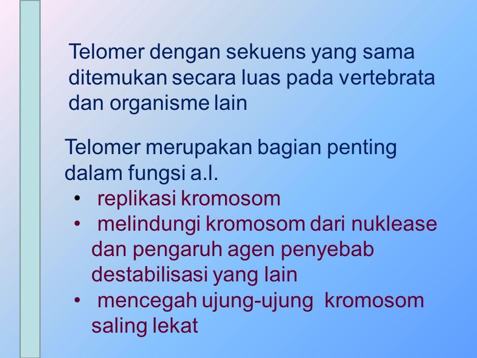 Telomer dengan sekuens yang sama ditemukan secara luas pada vertebrata dan organisme lain Telomer merupakan bagian penting dalam fungsi a.l. replikasi