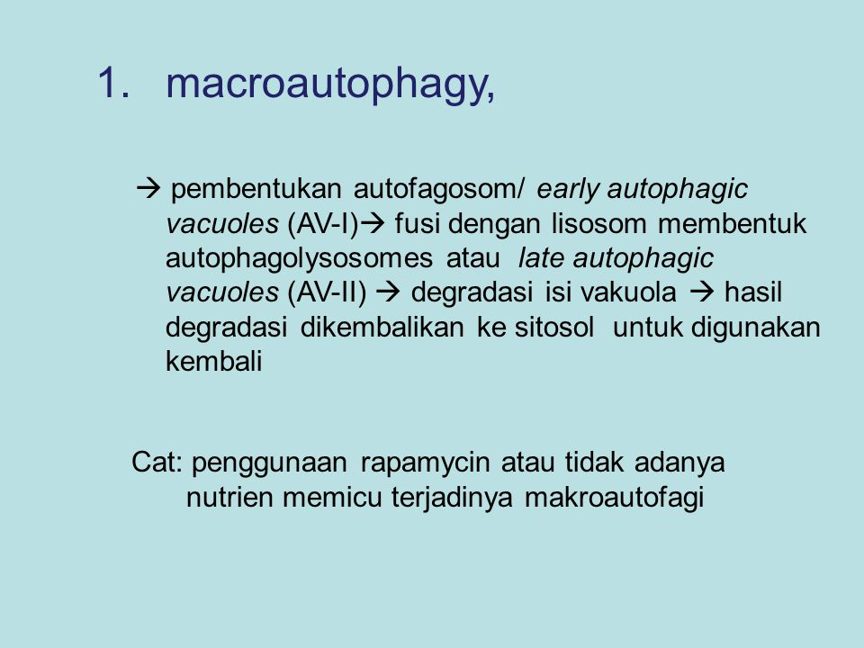 1.macroautophagy,  pembentukan autofagosom/ early autophagic vacuoles (AV-I)  fusi dengan lisosom membentuk autophagolysosomes atau late autophagic
