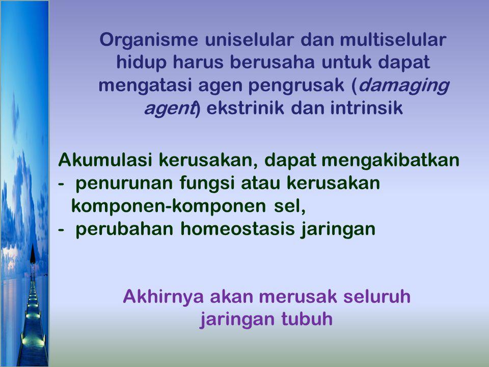 Akumulasi kerusakan, dapat mengakibatkan - penurunan fungsi atau kerusakan komponen-komponen sel, - perubahan homeostasis jaringan Akhirnya akan merus