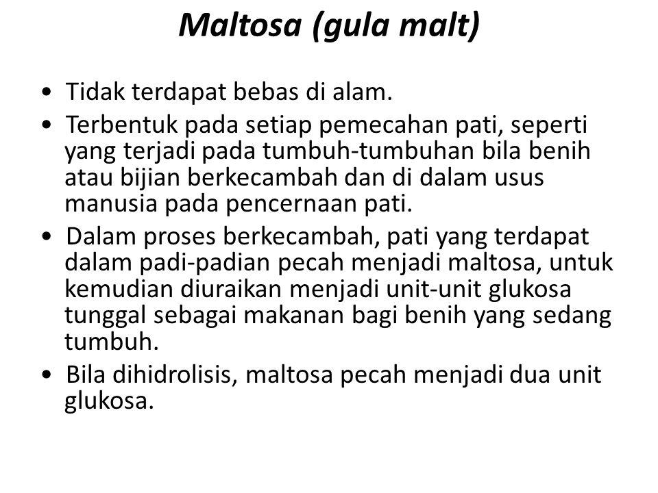 Maltosa (gula malt) Tidak terdapat bebas di alam. Terbentuk pada setiap pemecahan pati, seperti yang terjadi pada tumbuh-tumbuhan bila benih atau biji