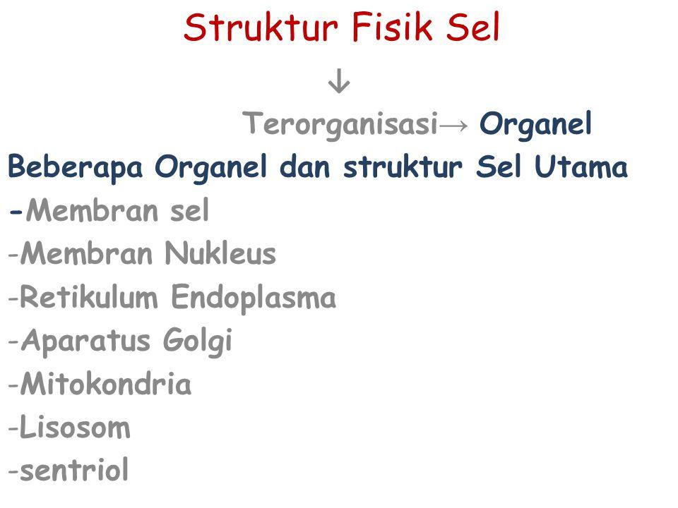 Struktur Fisik Sel ↓ Terorganisasi → Organel Beberapa Organel dan struktur Sel Utama -Membran sel -Membran Nukleus -Retikulum Endoplasma -Aparatus Gol