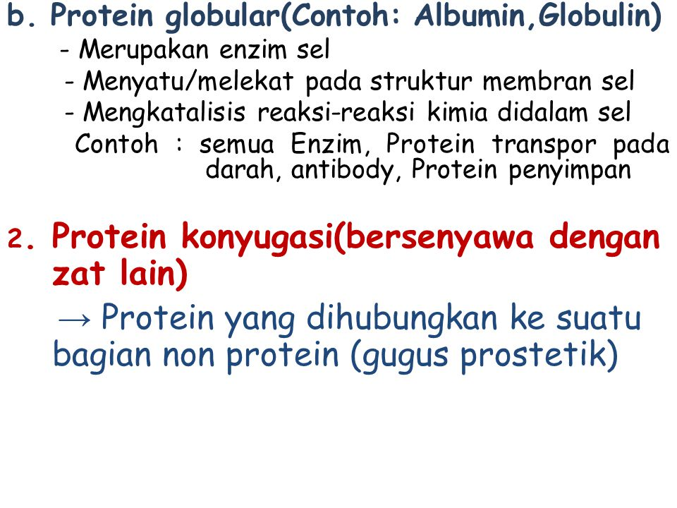 b. Protein globular(Contoh: Albumin,Globulin) - Merupakan enzim sel - Menyatu/melekat pada struktur membran sel - Mengkatalisis reaksi-reaksi kimia di