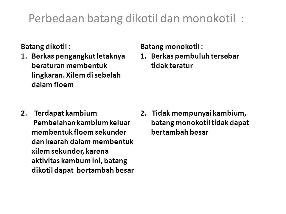 Perbedaan batang dikotil dan monokotil : Batang dikotil : 1.Berkas pengangkut letaknya beraturan membentuk lingkaran.