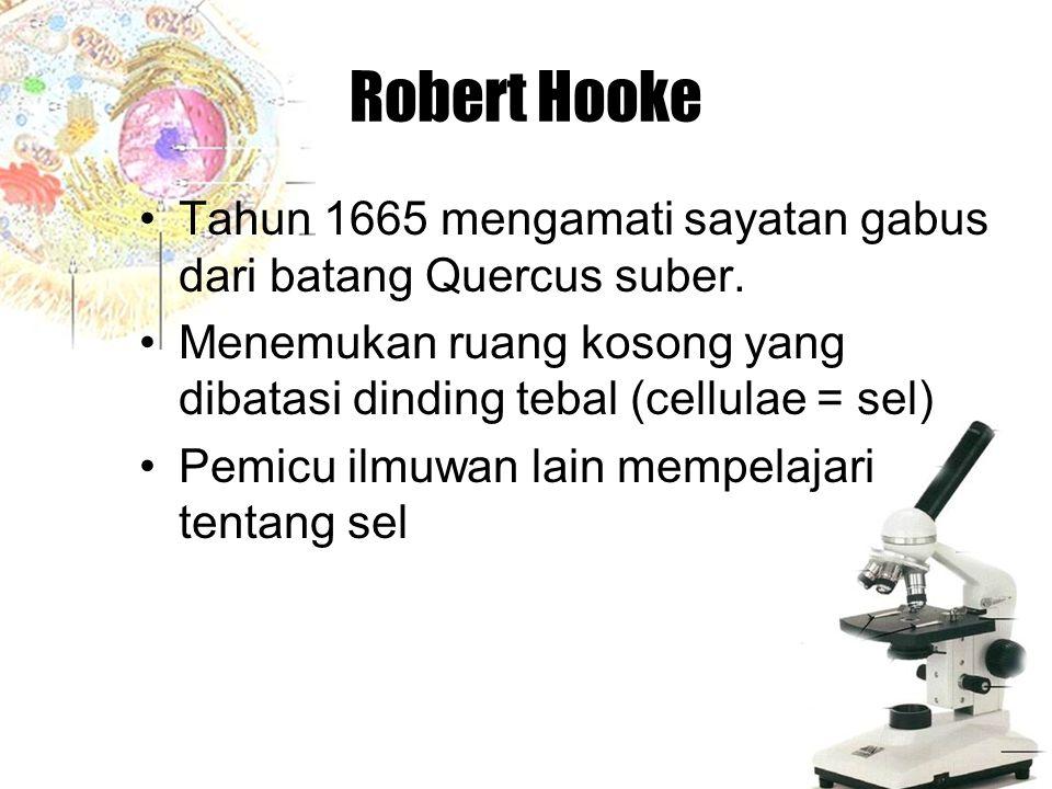 Robert Hooke Tahun 1665 mengamati sayatan gabus dari batang Quercus suber. Menemukan ruang kosong yang dibatasi dinding tebal (cellulae = sel) Pemicu