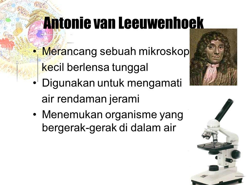 Antonie van Leeuwenhoek Merancang sebuah mikroskop kecil berlensa tunggal Digunakan untuk mengamati air rendaman jerami Menemukan organisme yang berge