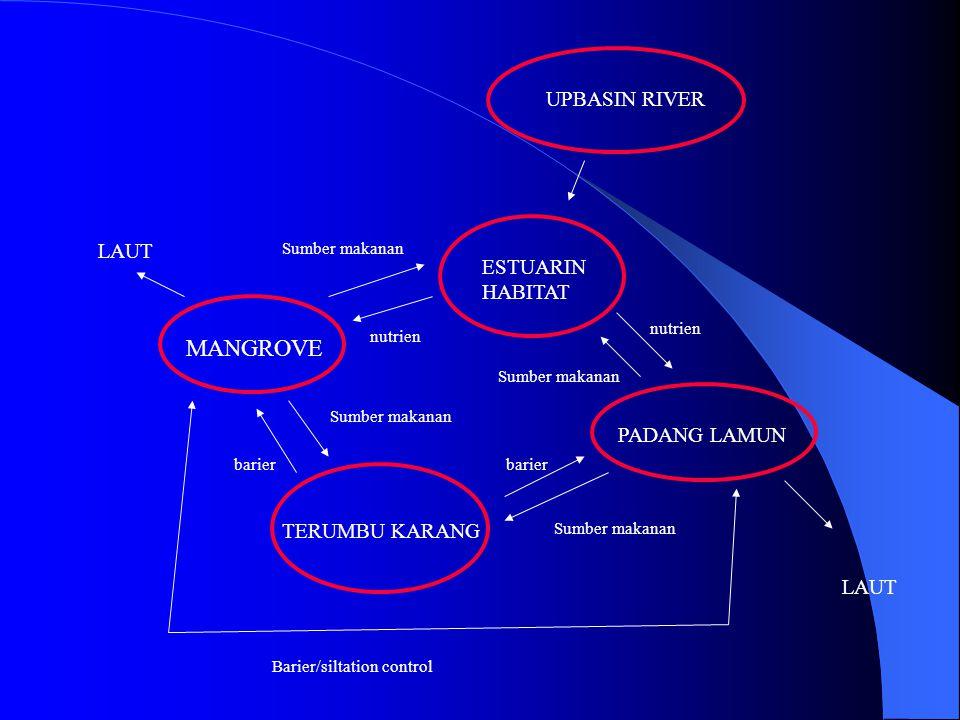 FUNGSI FISIK  Mengendalikan abrasi pantai Suryana (1998) : di pantai utara Jawa abrasi pantai relatif tidak terjadi pada lokasi yang ditumbuhi mangrove dengan lebar  100 m  Mengurangi tiupan angin kencang dan terjangan gelombang laut Suryana (1998) : daya jangkau air pasang berkurang lebih dari 60% pada lokasi dengan lebar mangrove  100 m  Menyerap dan mengurangi pencemaran (polutan) * Jaringan anatomi tumbuhan mangrove mampu menyerap bahan polutan (IUCN & E/P Forum) * Darmiyati et al (1995) : Rhizophora mucronata dapat menyerap 300 ppm Mn, 20 ppm Zn, 15 ppm Cu * Saepulloh (1995) : pada daun Avicennia marina terdapat akumulasi Pb  15 ppm, Cd  0,5 ppm, Ni  2,4 ppm  Mempercepat laju sedimentasi sehingga daratan bertambah luas.