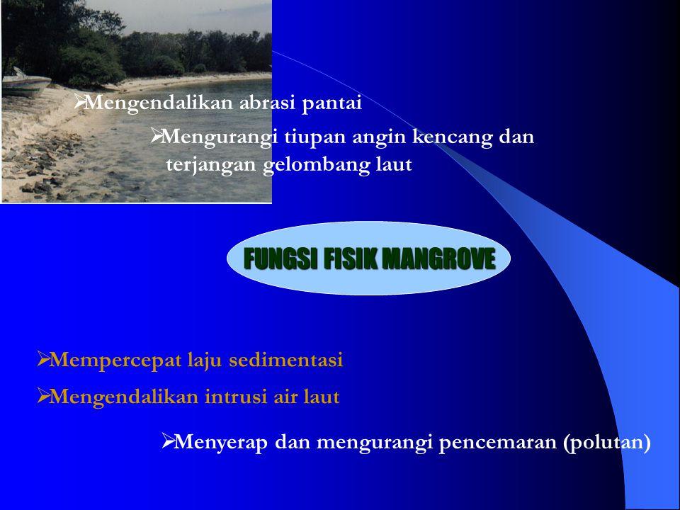  Menyerap dan mengurangi pencemaran (polutan) FUNGSI FISIK MANGROVE  Mengendalikan abrasi pantai  Mengurangi tiupan angin kencang dan terjangan gelombang laut  Mempercepat laju sedimentasi  Mengendalikan intrusi air laut