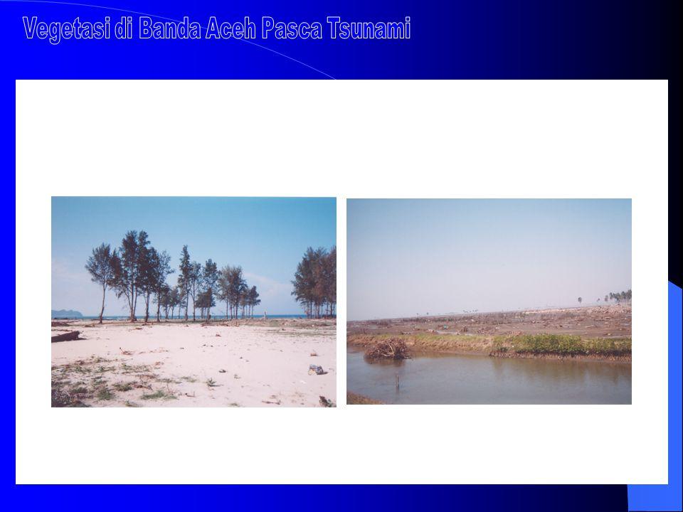  Menyerap dan mengurangi pencemaran (polutan) FUNGSI FISIK MANGROVE  Mengendalikan abrasi pantai  Mengurangi tiupan angin kencang dan terjangan gel
